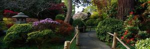 Japanese Tea Garden, San Francisco, California, USA