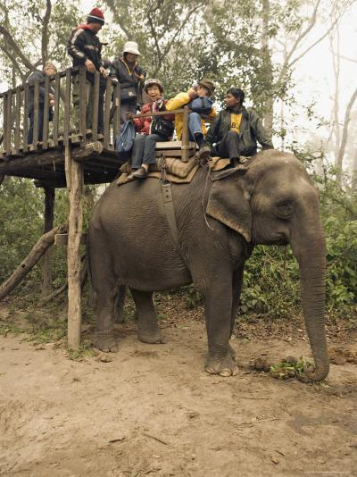 Japanese Tourists Board the Elephant That Will Take Them on Safari-Don Smith-Photographic Print