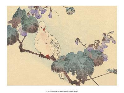 Japanese White Dove-Haruna Kinzan-Art Print