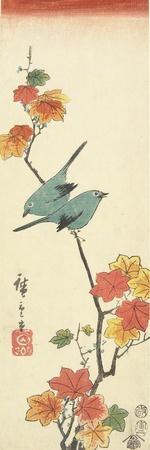 Japanese White-Eyes on a Maple Branch, 1854-Utagawa Hiroshige-Giclee Print
