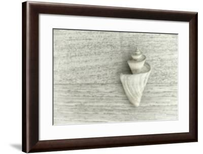 Japanese Wonder Shell-Cora Niele-Framed Photographic Print