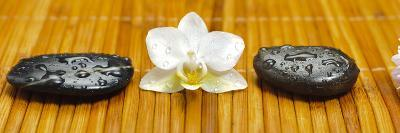 Japanese Zen Garden-filmfoto-Photographic Print