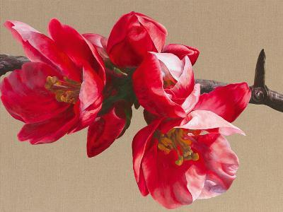 Japonica Blush-Sarah Caswell-Giclee Print