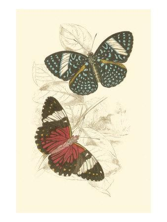 https://imgc.artprintimages.com/img/print/jardine-butterflies-i_u-l-q11anhd0.jpg?p=0