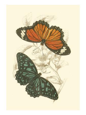 https://imgc.artprintimages.com/img/print/jardine-butterflies-ii_u-l-q11ania0.jpg?p=0
