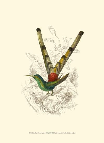Jardine Hummingbird II-Sir William Jardine-Art Print