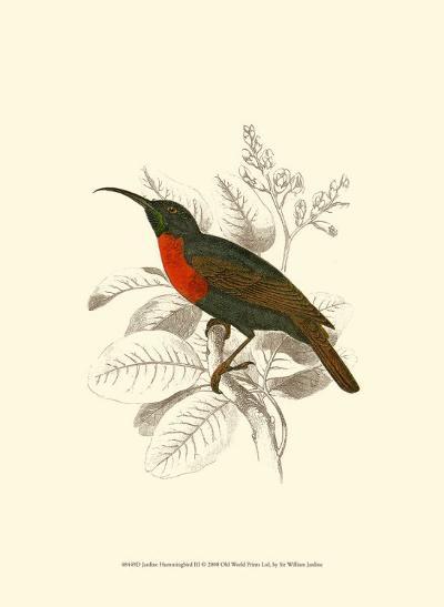 Jardine Hummingbird III-Sir William Jardine-Art Print