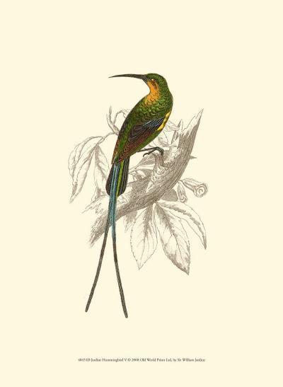 Jardine Hummingbird V-Sir William Jardine-Art Print