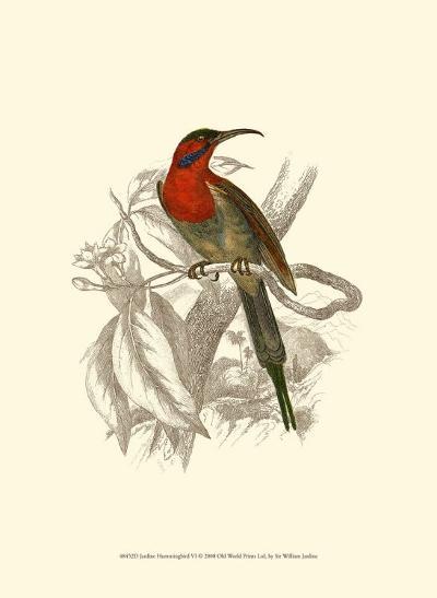 Jardine Hummingbird VI-Sir William Jardine-Art Print