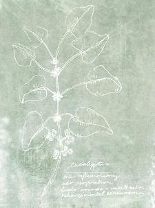 Essential Botanicals I by Jarman Fagalde