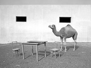 Animal Talk 11, by Jaschi Klein