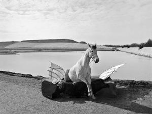 Pegasus 1, 2015 by Jaschi Klein