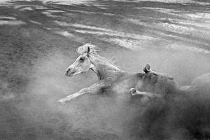 Pferd-Traum 1, 2015 by Jaschi Klein