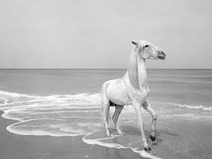 Pferd-Traum 4, 2015 by Jaschi Klein
