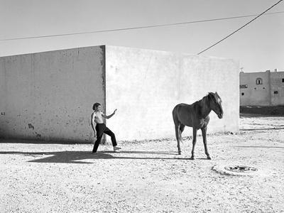 Pferd-Traum 6, 2015