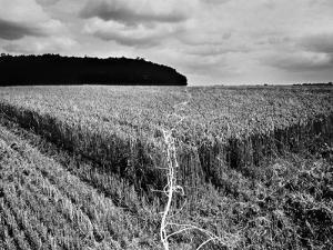 Rheinlandschaften 5, 2015 by Jaschi Klein