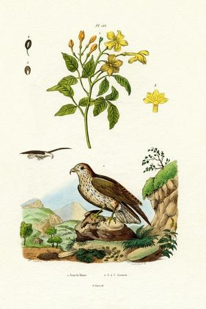 Jasmine, 1833-39--Giclee Print