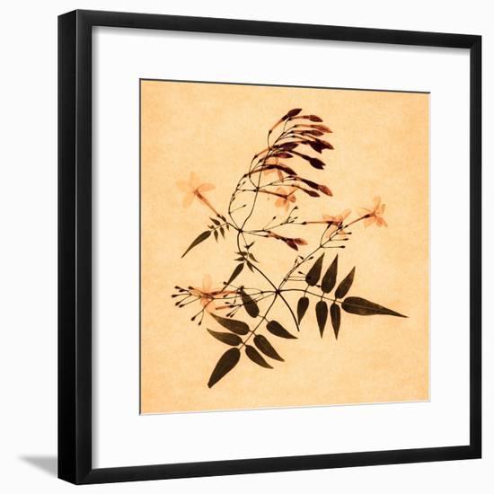 Jasmine-Graeme Harris-Framed Giclee Print