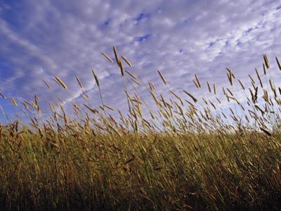 A Grassland Scene in Victoria by Jason Edwards