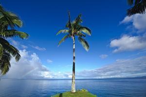 A Palm Tree Overlooks a Calm Sea on an Idyllic Tropical Island by Jason Edwards