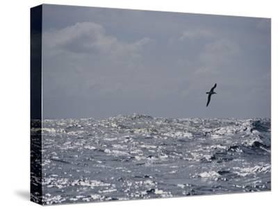 Albatross in Flight over Sunlit Ocean
