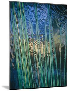 Grass Stems Set against the Rippled Surface of a Pond by Jason Edwards