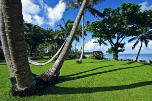 Hammocks Hang Lazily Between Garden Palm Trees Overlooking the Sea by Jason Edwards