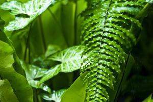 Raindrops Pour from Fern Frond Leaves During a Tropical Downpour by Jason Edwards