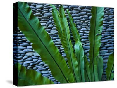 Rich Green Fern Leaves Against a Wall Built of Volcanic River Stones
