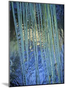 Water Ribbon Grasses, Triglochin Procera, in a River Stream, Australia by Jason Edwards