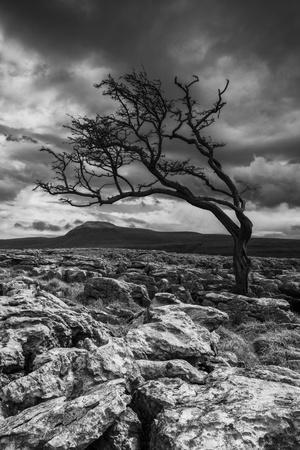 England, North Yorkshire, Twisleton Scar.