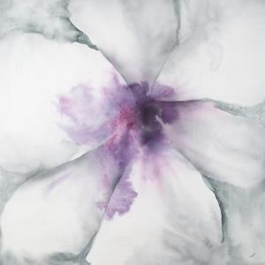 Medallion Orchid by Jason Jarava