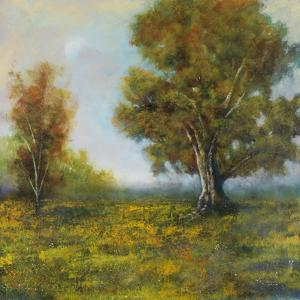 Valley Field by Jason Jarava