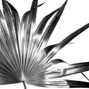 Black and White Palm I by Jason Johnson