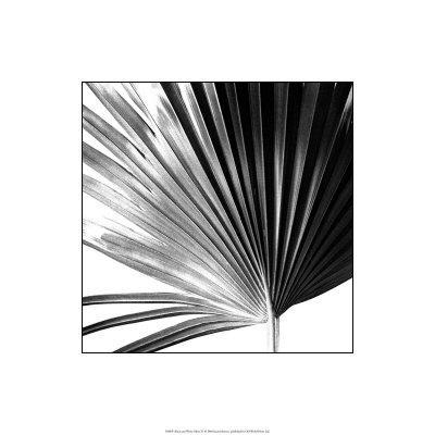 Black and White Palms IV