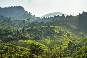 Lush Green Jungle Landscape Along Ho Chi Minh Highway West, Quang Nam Province, Vietnam by Jason Langley