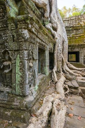 Ta Prohm Temple (Rajavihara), Angkor, UNESCO World Heritage Site, Siem Reap Province, Cambodia by Jason Langley