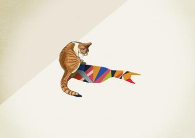 Cat by Jason Ratliff