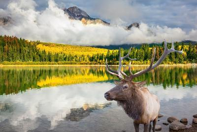 Jasper National Park in the Rocky Mountains of Canada. Proud Deer Antlered Stands on the Banks of T-kavram-Photographic Print