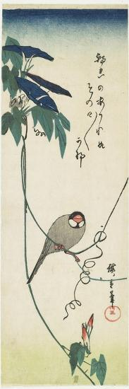 Java Sparrow and Morning Glories, 1834-1839-Utagawa Hiroshige-Giclee Print