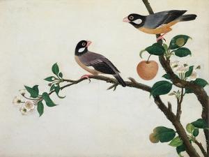 Java Sparrow, c.1800-1840
