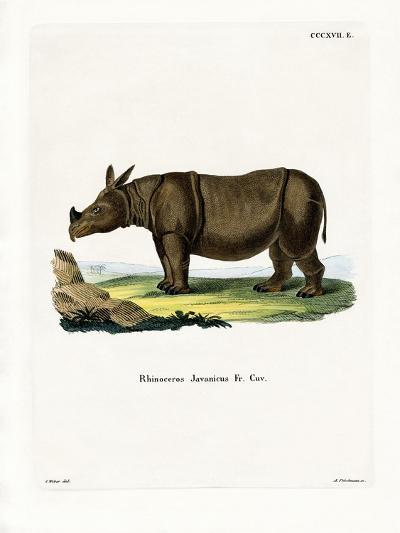 Javan Rhinoceros--Giclee Print
