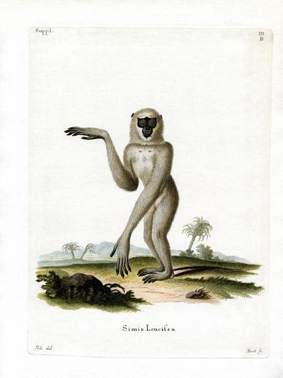 Javan Silvery Gibbon--Giclee Print