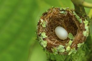 Hummingbird Egg in a Nest by Javier Aznar