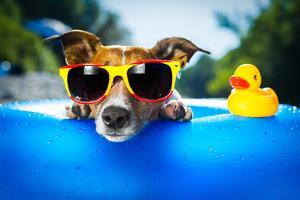 Beach Dog by Javier Brosch