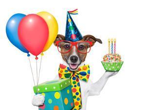 Birthday Dog by Javier Brosch
