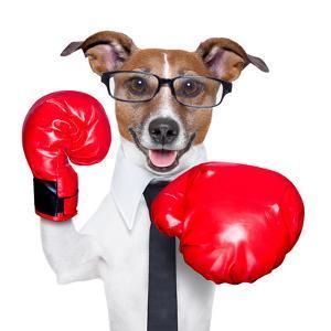Boxing Dog by Javier Brosch