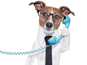 Business Dog On The Phone by Javier Brosch