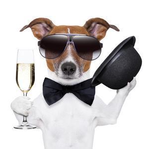 Cheers Dog by Javier Brosch