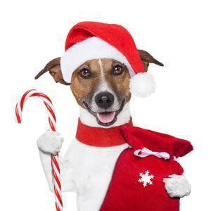 Christmas Dog by Javier Brosch